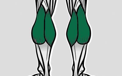 ماهیچه های ساق پا